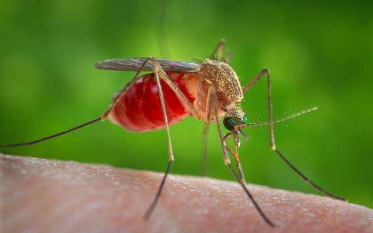 Photo of Mosquitoe